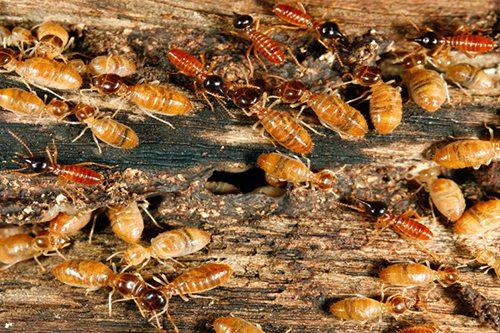 cts termite treatment