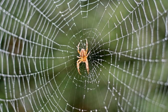 istock 000010179043small spider2